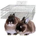 Jaulas transporte conejos