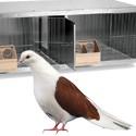 Criaderos palomas