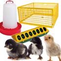 Jaulas pollos